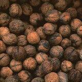植物,种植园,非常适合Berandagadeningu。核桃是一种营养食品是从古代(一盅)是!核桃苗15厘米锅[くるみ(胡桃)『菓子クルミ』 15cmポット苗 05P01Mar15]