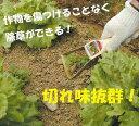 作物を傷つけることなく除草ができる、ハンディタイプのクワ。【送料無料】 作物の間の除草が...