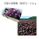 大原の赤紫蘇(枝付き)5kg梅干12.5kg用