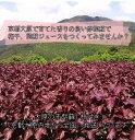 6月24日(土)配達指定大原の赤紫蘇(枝付き)事前予約4kg梅干10kg用