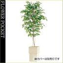 大幅割引!【送料無料】人工樹木(CT触媒加工)ベンジャミナスプラッシュ高さ1.8m(ケ9)