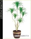 大幅割引!【送料無料】人工樹木(CT触媒加工)コンシナトリコロル高さ1.4m(ケ8)