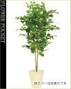 大幅割引!【送料無料】人工樹木(CT触媒加工)ヘーゼルナッツデュアル高さ1.5m(ケ8)