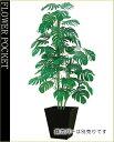 大幅割引!【送料無料】人工樹木(CT触媒加工)ジャンボモンステラ高さ1.8m(ケ9)
