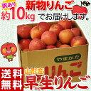 《送料無料》山形産 「早生りんご」 バラ詰 茶箱 約10kg(28〜54玉前後) frt ○