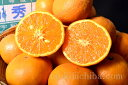 希少な柑橘「なつみ」が築地市場へ緊急入荷!