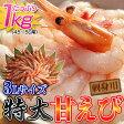 ロシア産 特大3Lサイズ 刺身用甘エビ 1kg45〜50尾 ※冷凍 sea ○