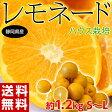 《送料無料》静岡産「レモネード」S〜L 約1.2キロ frt ☆ レモン(檸檬・れもん)