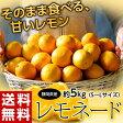 《送料無料》静岡産 『レモネード』 S〜L 約5キロ frt ☆