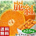 《送料無料》長崎産 『麗紅』 秀品 約2.5kg S〜Lサイズ frt ○