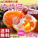 《送料無料》山口県産 ゆめほっぺ S〜2L 約2kg frt ☆