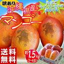 《送料無料》訳有り『沖縄産マンゴー』 大ボリュームの約1.5kg(3〜6玉) frt ☆