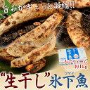 北海道根室産 「生干しコマイ」1kg ※冷凍 sea ☆