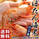 《送料無料》ロシア産 「ぼたん海老」特大2L メス限定 500g(8�9尾) ※冷凍 sea ☆