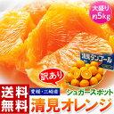 《送料無料》愛媛・三崎産  「シュガースポット清見オレンジ(訳あり)」 M?3L 約5kg frt