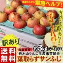 ≪送料無料≫青森県産『訳あり葉とらずサンふじ』約3kg(6〜13玉)岩木山りんご生産出荷組合 frt ◯