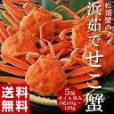 カニ かに 蟹 せいこがに セコガニ 勢子蟹 兵庫県香住産 ...