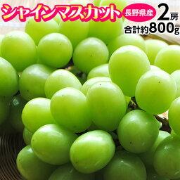 ぶどう ブドウ 葡萄 長野県産 <strong>シャインマスカット</strong> 2房 計約800g 送料無料