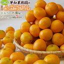 送料無料 和歌山県産 早和果樹園の小玉みかん S〜3Sサイズ限定 約5kg
