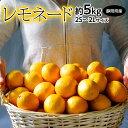 柑橘 静岡県産 レモネード 約5kg 2S〜2Lサイズ 常温 送料無料