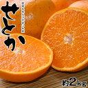 せとか 柑橘 みかん ミカン 蜜柑 和歌山または愛媛県産 訳...