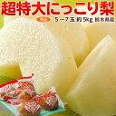 梨 なし 栃木県産 にっこり梨 超大玉 秀品 5~7玉 約5kg 鮮度保持袋つき 送料無料