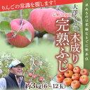 長野県須坂産 大澤さんの「木成り完熟ふじりんご」 約3キロ6〜12玉 frt ☆