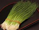 小ねぎの中で最高級葱!【こだわり食材!】 山口産 他 ふぐ葱 1束 約350g