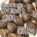 活け赤貝 特選殻 石巻渡波産 他 約100-120g/個 計1kg 築地直送 高級貝類 国産 アカガイ 職人の食材【国産赤貝1K】