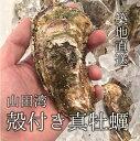 殻付き牡蠣 カキ 生食用 三陸 山田湾 約150-200g 特大サイズ 計30個 送料無料 真牡蠣