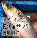 生 松輪サバ 神奈川県名産 高級ブランドサバ 600-700g 鮮魚 松輪鯖 築地直送【松輪サバ600-700g】