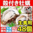 【送料無料 生牡蠣 殻付き 生食用カキ】生牡蠣 48個入り