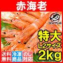 【送料無料】赤海老 赤えび 2kg 特大 L2 30?60尾 業務用 1箱 お刺身用 ぼたん海老を超