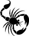 ショッピング黒 タトゥーシール_サソリ2【黒】【送料無料】【ゆうパケット発送】漆黒のうつし絵<TATTOO_ボディシール>はがれにくい_長持ち_ドレス_クラブ_結婚式_iPhone【代引き不可】