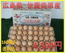 【送料込】コスモス卵 ピンク 160個入り ☆
