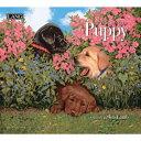 【メール便可2枚まで】 2020年 LANG社(ラング)カレンダー パピー(Puppy)【8月上旬発送】