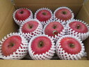 【送料無料】 青森県産りんご 贈答用 サンふじ3kg青森 りんご 3kg 送料無料 贈答用りんご