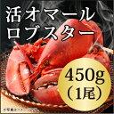 ◆活 オマール ロブスター(450gx1尾)カナダ直輸入/高...