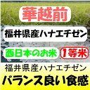 【令和元産 】福井県産 いちほまれ 5kg 送料無料 ※北海道、沖縄は発送見合わせております。