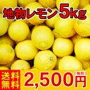 【送料無料】レモンのビタミンCは健康必需品!今年は大変お待たせ致しました。【レ5】地物レモン5kg               2,500円(税別)【全国どこでも送料無料】【smtb-KD】