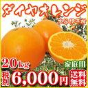 【Fダ1002】【愛媛県産】ダイヤオレンジ20kg(大谷伊予柑)(家庭用・大小サイズ込)【全国どこでも送料無料】