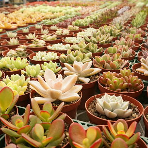 多肉植物 インテリア グリーン