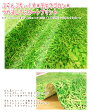 ぷらんぷちぃくす「芝生でゴロン」柄つや消しラミネートプリント【生地 布 草むら リアル 自然 ビニールコーティング】