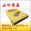 山口産キウイフルーツ 36玉サイズ