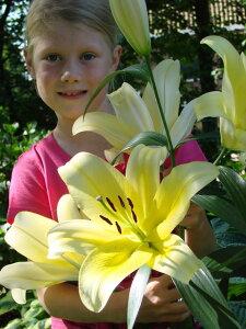 驚きの巨大花をつける迫力満点の百合オリエンタル百合球根 プレミアム アムフォーラ 1球入