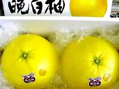 ばんぺいゆ・熊本八代産の晩白柚(バンペイユ)2Lサイズ(2玉入り)