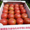【送料無料】ミネラルトマト/箱満杯詰め1箱 熊本産 ミネラル豊富! 糖度5.5〜7.9以上保証 フルーツ感覚 しあわせ畑 とまと トマト 箱詰め ミニトマト ミニとまと フルーツトマト ダイエット 美白 美肌 美容 リコピン 完熟 夏野菜 野菜