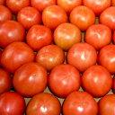 塩トマト むつごろう約1.0kg 熊本産