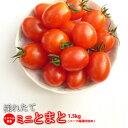 ミニトマト 糖度8度以上保証【送料無料】 トマト/新鮮 ミネラルミニトマト 1.5kg 熊本