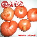 【送料無料】【訳あり】産地直送 減農薬 トマト 箱満杯詰め2箱/熊本産 ミネラル 国産トマト 贈答品 贈答 贈り物 高糖度